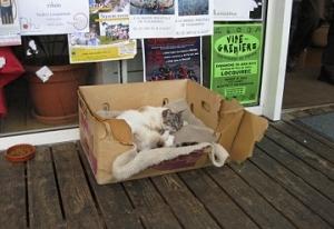 Katze Bretagne 1
