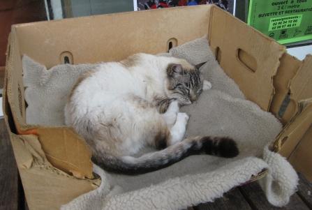 Katze Bretagne 2
