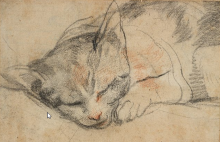 federico-barocci-study-of-al-cat-sleeping